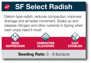 SF Select Radish (Spring Termination)