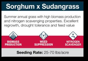 Sorghum X Soudangrass