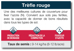 Trèfle rouge