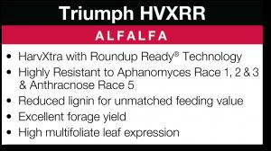 Triumph HVXRR Alfalfa
