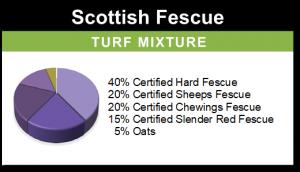 Scottish Fescue – Golf