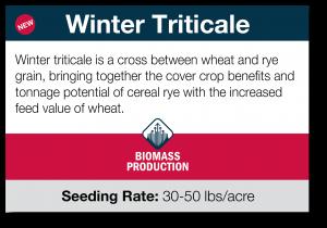 Winter Triticale