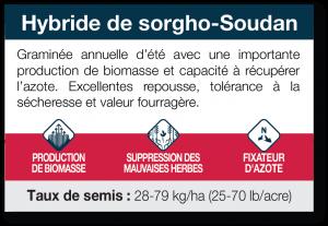 Hybride de sorgho-Soudan