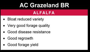AC Grazeland BR